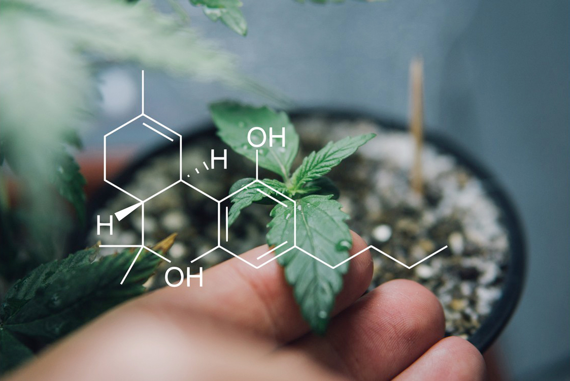 hand tending to a cannabis plant with chemical molecule diagram overlaying the image